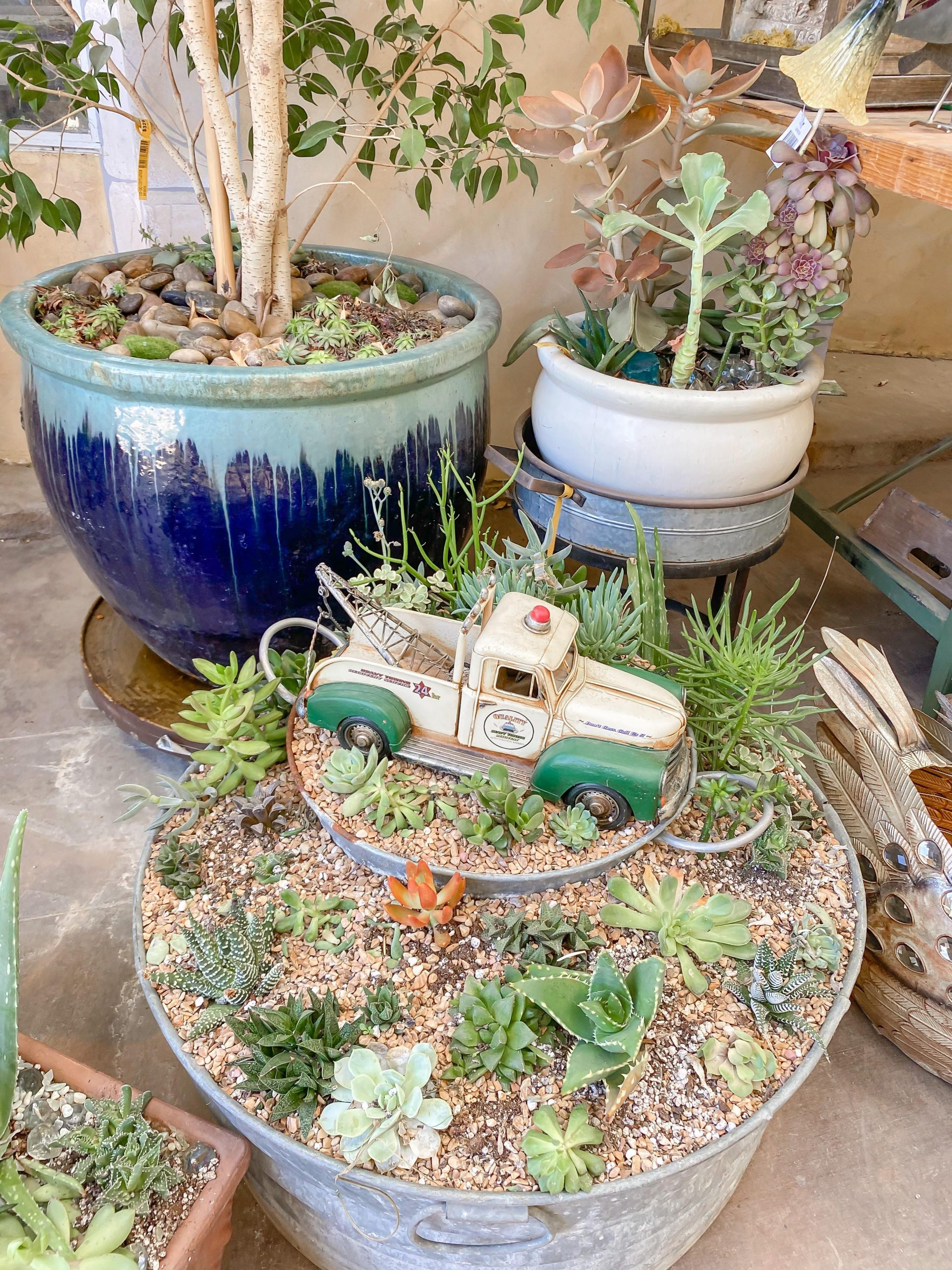 5 Reason's You will love starting a Succulent Garden